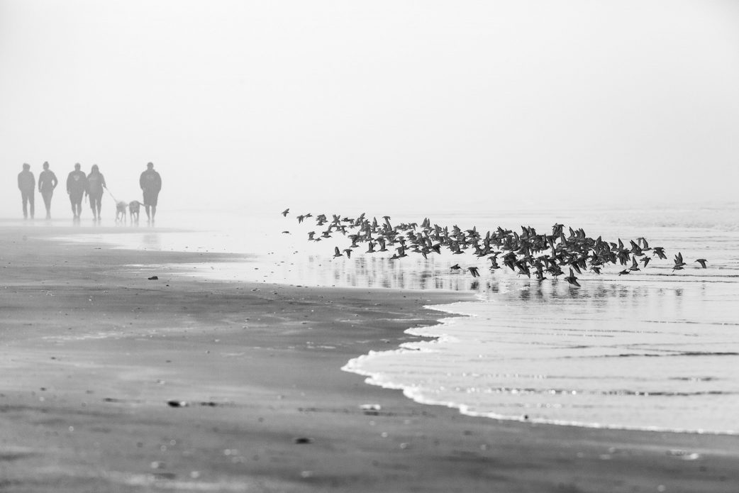 A black and white image of a flock of birds flying over a beach in heavy fog, with silhouettes of people strolling along the shore in the background.