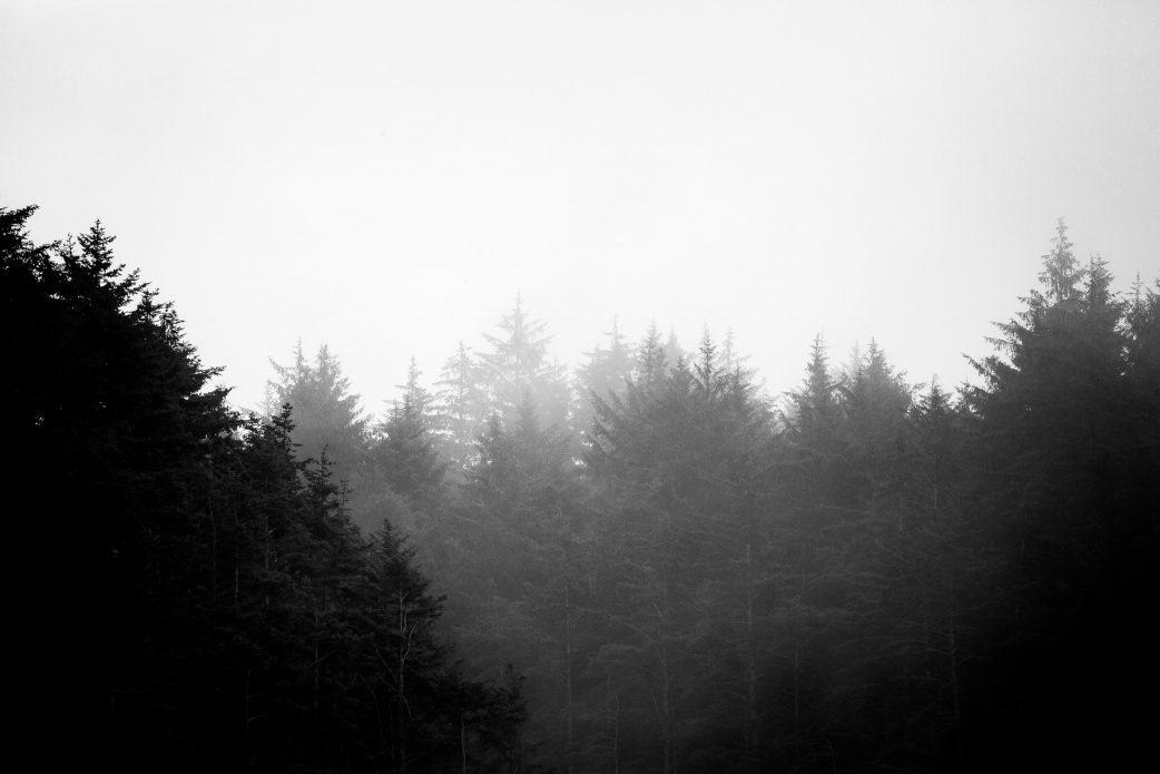 Coastal trees in the fog.