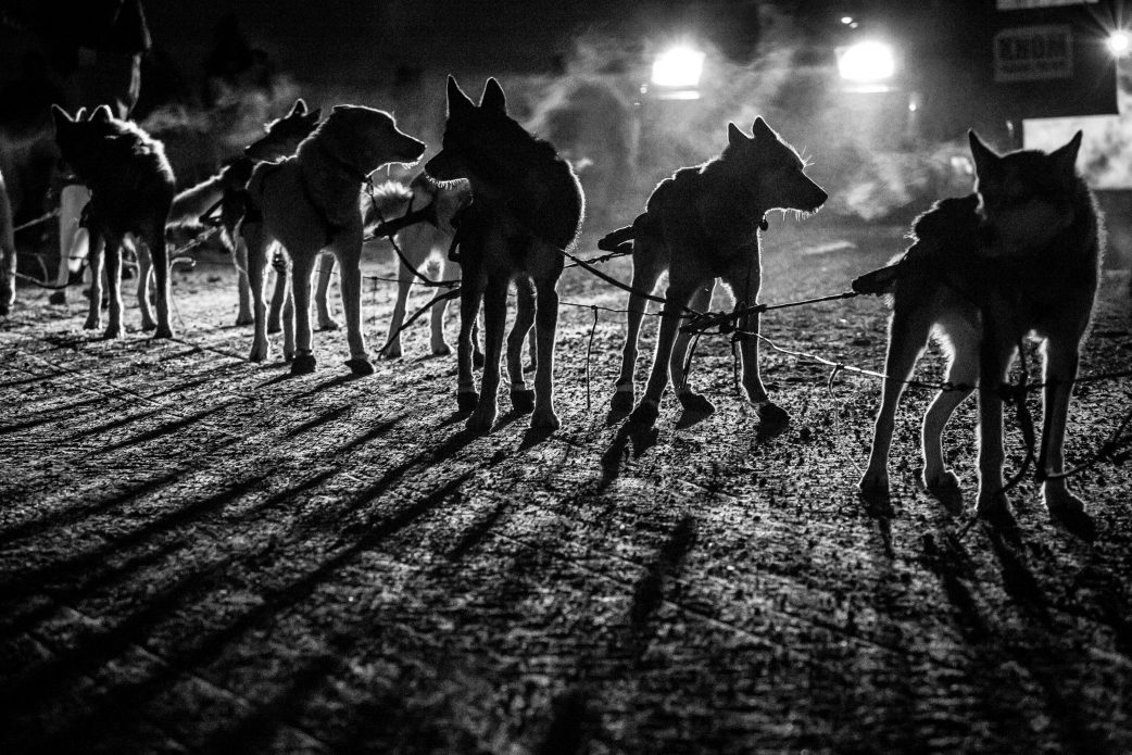 Sled dogs in black-and-white silhouette.