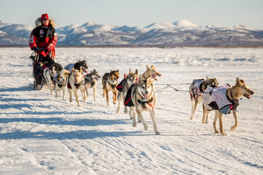 In bright sunshine, musher in a red parka leads a team of dogs along a snowy path.
