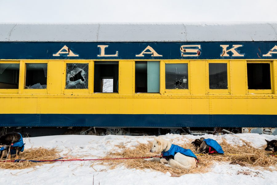 Sled dogs rest in front of abandoned passenger railroad car.