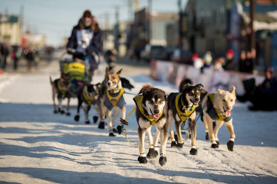 Sled dog team mushes towards camera
